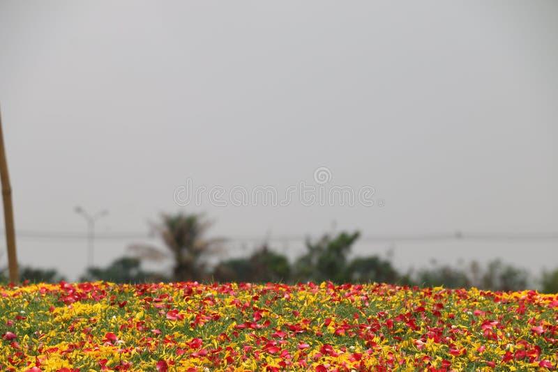 Pedaal van bloem over het groene grasgebied stock foto's