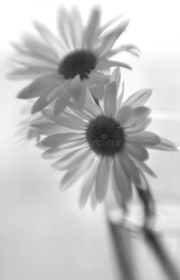 Pedane nere & bianche immagini stock