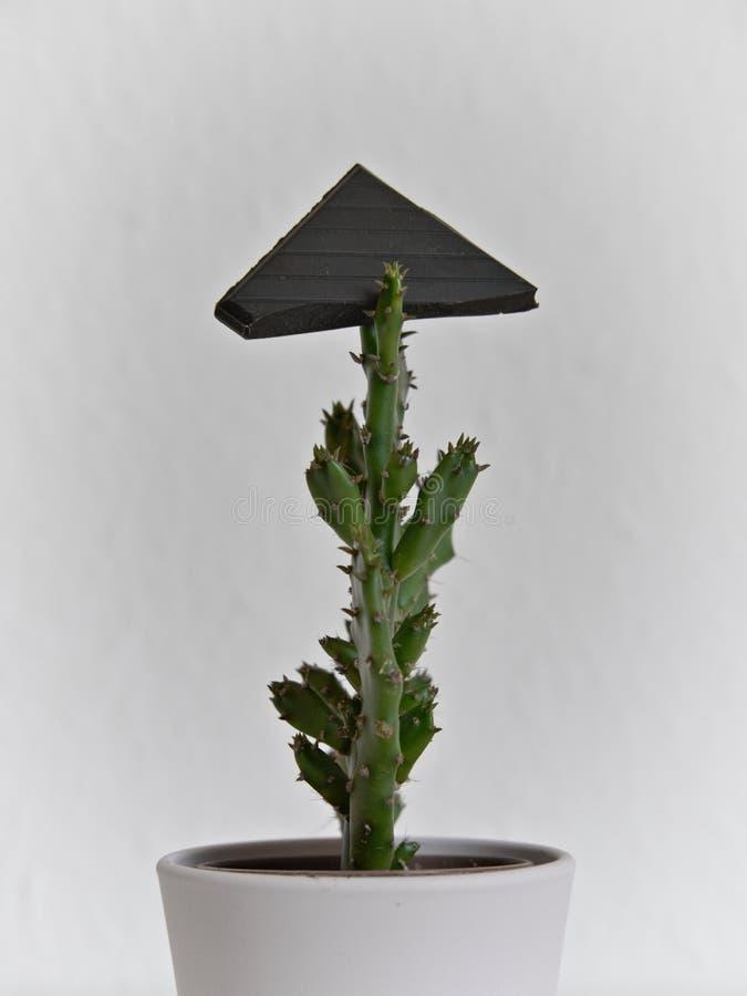Pedazo de chocolate encima de un pequeño cactus imagen de archivo