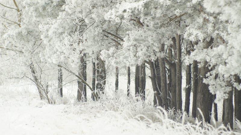 Pedazo de madera blanco y negro fotos de archivo libres de regalías