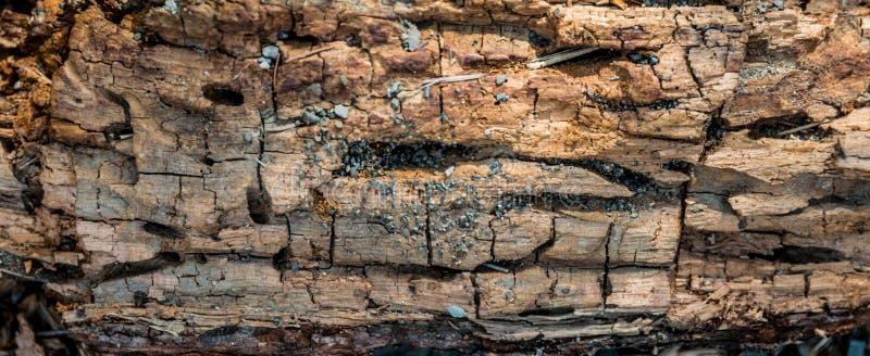 Pedazo de madera putrefacto foto de archivo libre de regalías