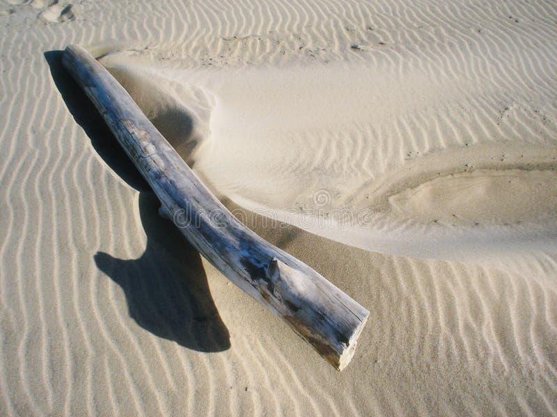 Pedazo grande de madera de la deriva en lanzar de la playa pulgares encima de la sombra foto de archivo libre de regalías