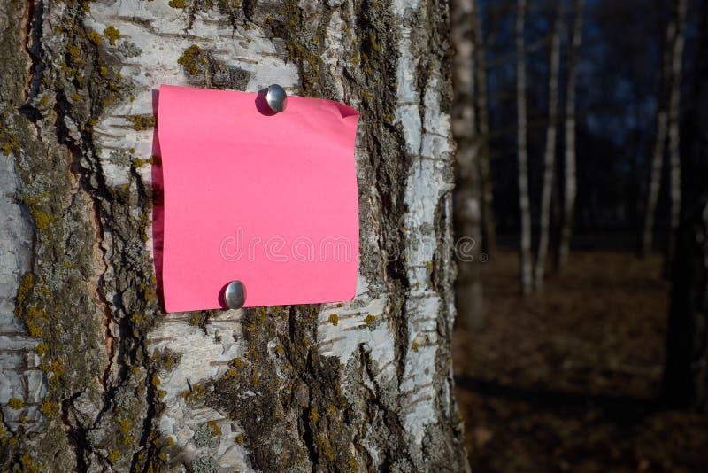 Pedazo rosado en blanco de papel de nota sujetado por los pernos al árbol de corteza imagenes de archivo