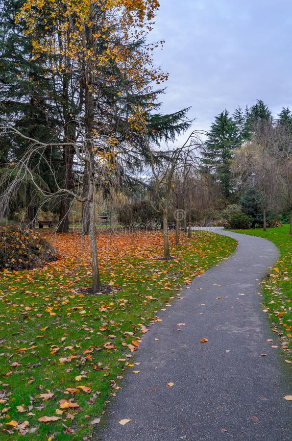 pedestrian path in an autumn city park with red and yellow fallen leaves on green grass, bare trees and green spruce trees royalty free stock images