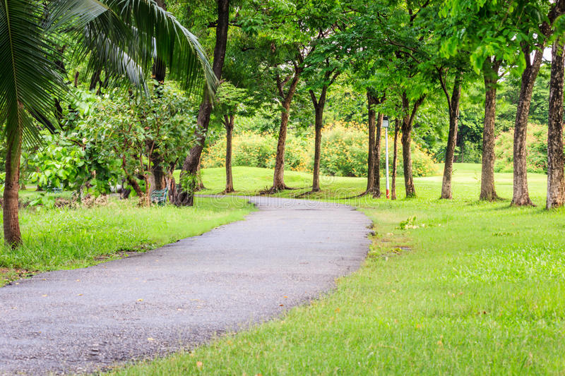 Pedestrian walkway. For exercise lined up with beautiful tall trees royalty free stock photography