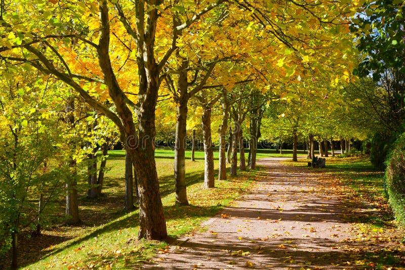 Download Pedestrian walkway stock photo. Image of pedestrian, park - 33283654