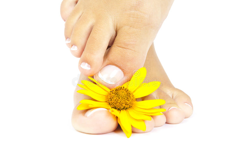 Download Pedicure Stock Images - Image: 26486154