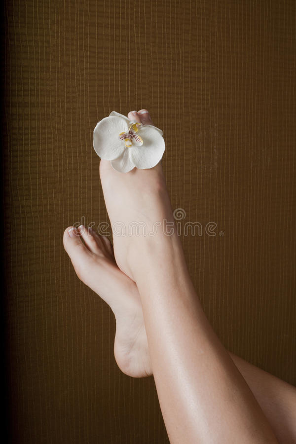 Pedicure legs with flower stock image
