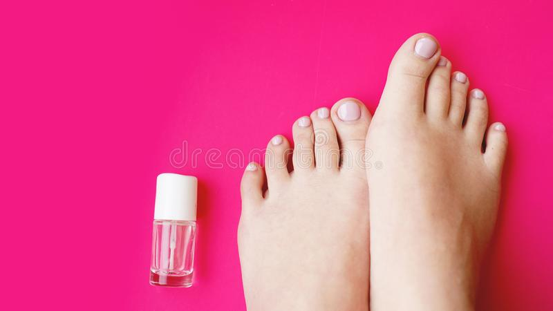 Pedicure with transparent nail polish on pink background. Healthy feet, health care royalty free stock photography