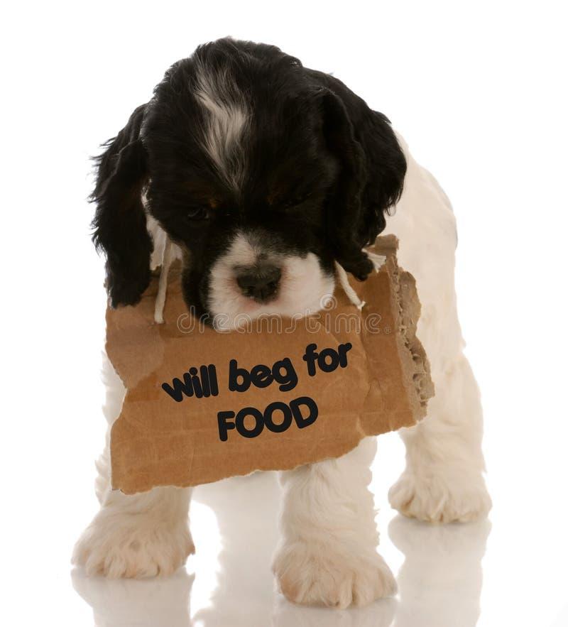 Pedido do filhote de cachorro foto de stock royalty free
