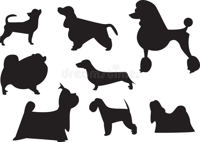 Pedigree Dogs Royalty Free Stock Images