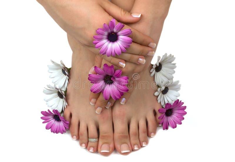 Download Pedispa stock photo. Image of blossom, aroma, aromatic - 4469428