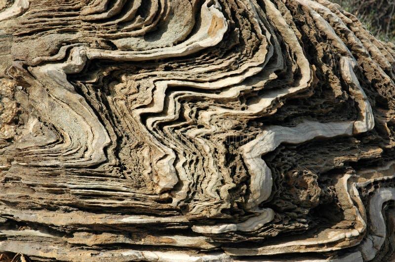 Pedra calcária resistida na costa mediterrânea fotos de stock