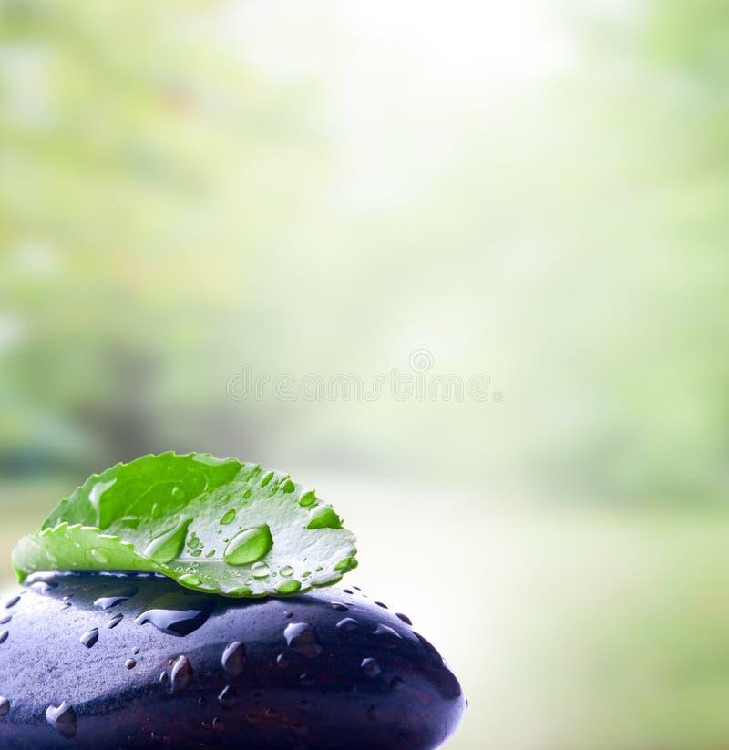 Pedra com folha foto de stock royalty free
