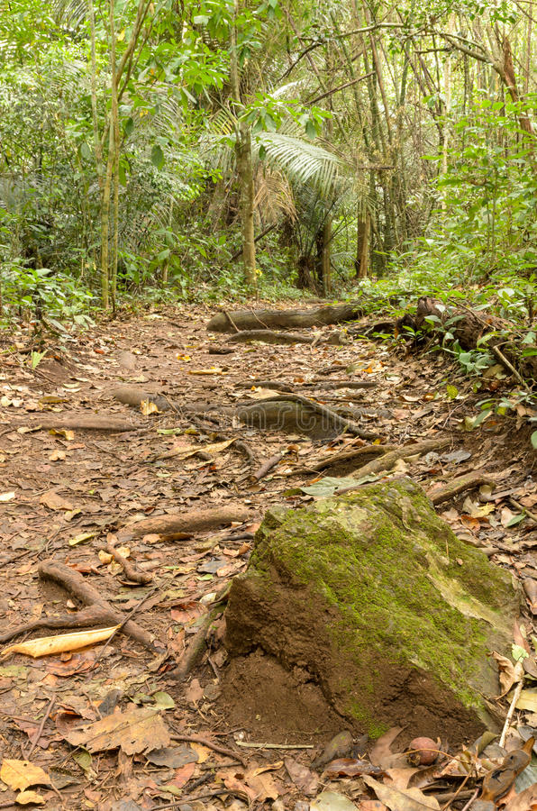 Pedra com musgo nas fugas da floresta imagens de stock