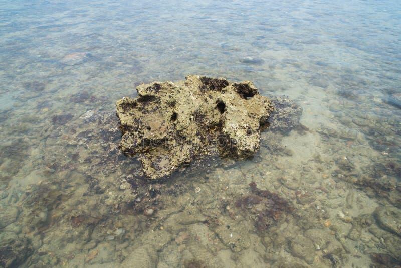 Pedra coral na água na areia do mar fotos de stock