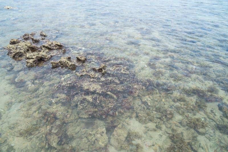 Pedra coral na água na areia do mar fotografia de stock royalty free