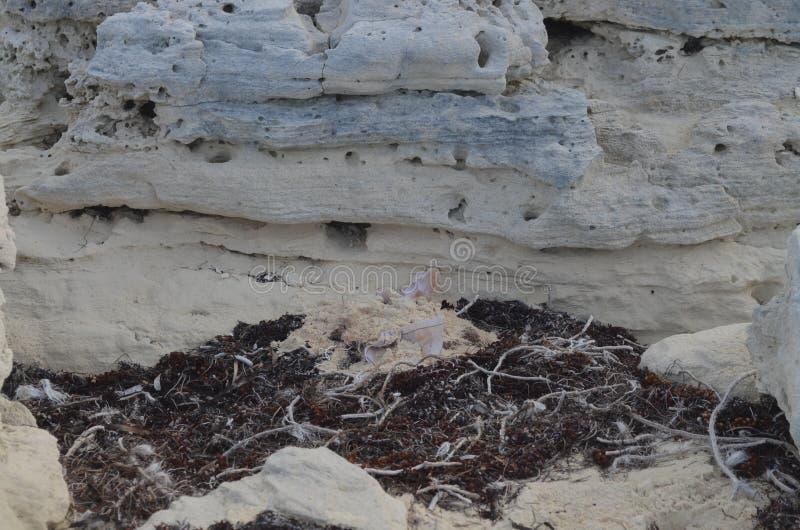 Pedra das caraíbas em Cayo Santa Maria fotografia de stock
