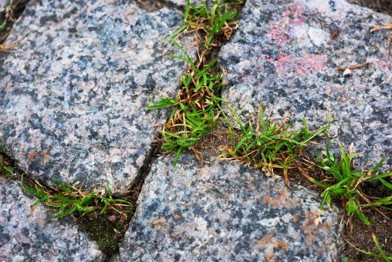 Pedra de pavimentação na grama foto de stock
