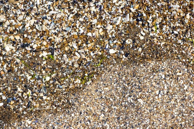 Pedra de Shell e do seixo imagem de stock