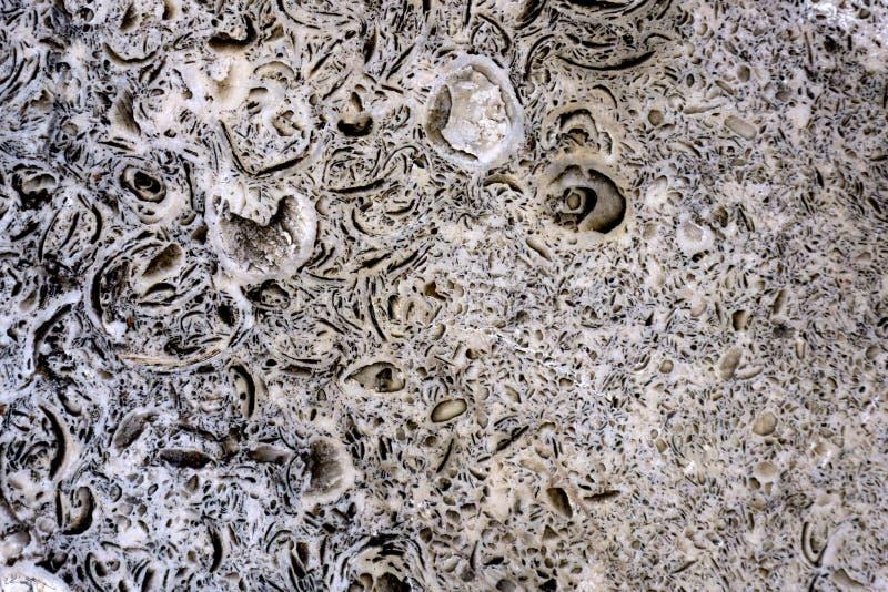 Pedra decorativa dendrite macro Placa áspera crua fotos de stock