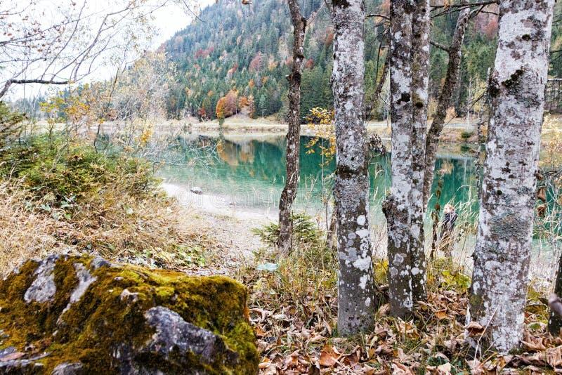 Pedra do musgo com vidoeiros em um lago da montanha no outono foto de stock royalty free