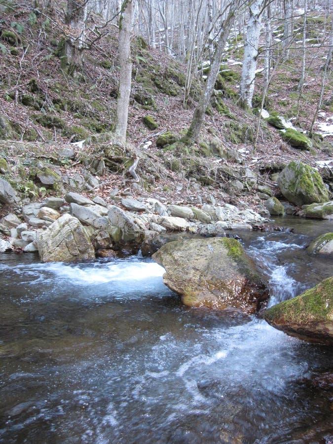 Pedra e árvores da natureza do rio imagem de stock royalty free