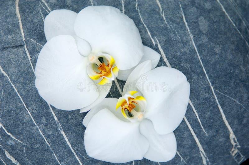 Pedra e orquídea imagens de stock royalty free