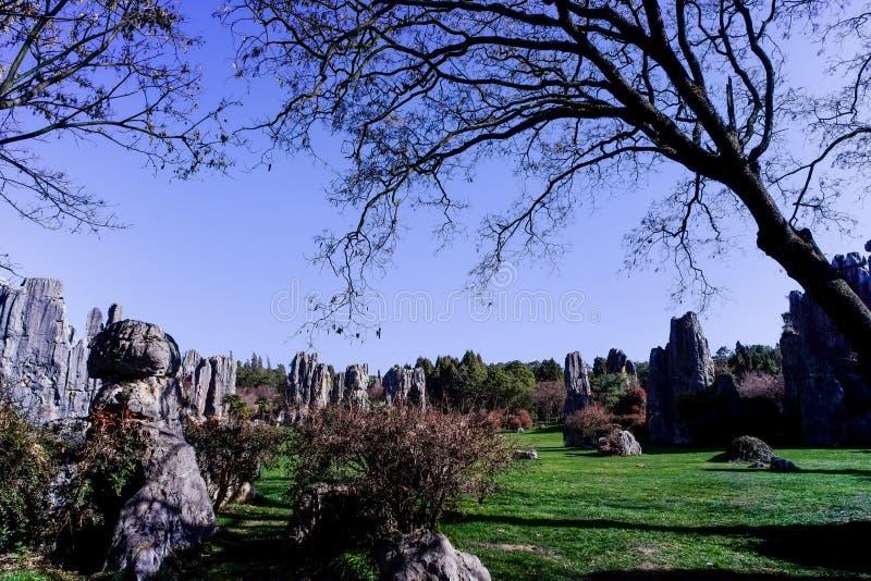 Pedra Forest World Geopark de Ásia China Yunnan imagem de stock