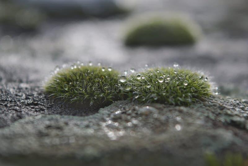 pedra Moos-crescida fotografia de stock