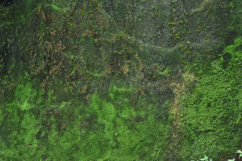 pedra Musgo-coberta fotos de stock