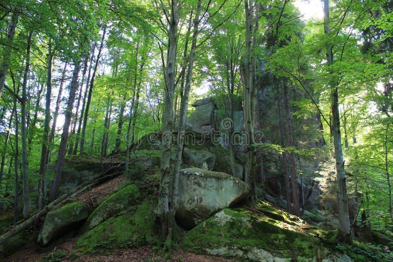 Pedra na floresta fotos de stock