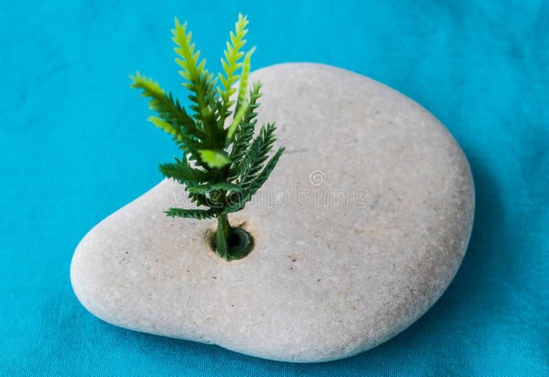 Pedra natural com um furo de que o broto cresce imagens de stock royalty free