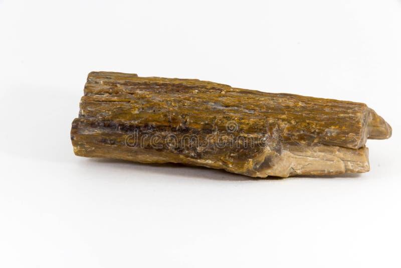 A pedra semipreciosa bonita petrificou a árvore em um fundo branco imagem de stock