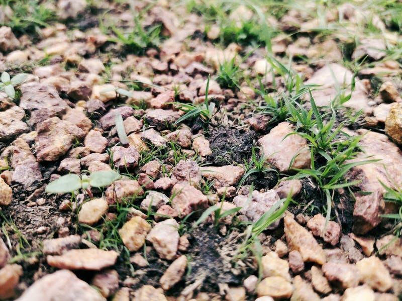 Pedra velha com grama verde fundo, grama imagem de stock royalty free