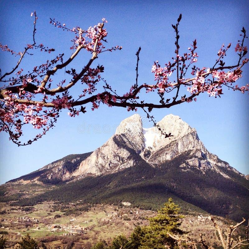 Pedraforca, de Mooie berg van Spanje met de roze bloesems van de appelboom royalty-vrije stock fotografie