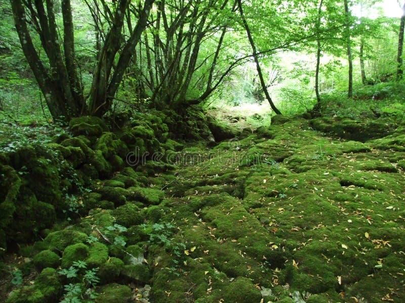 Pedras cobertos de vegetação musgosos foto de stock royalty free