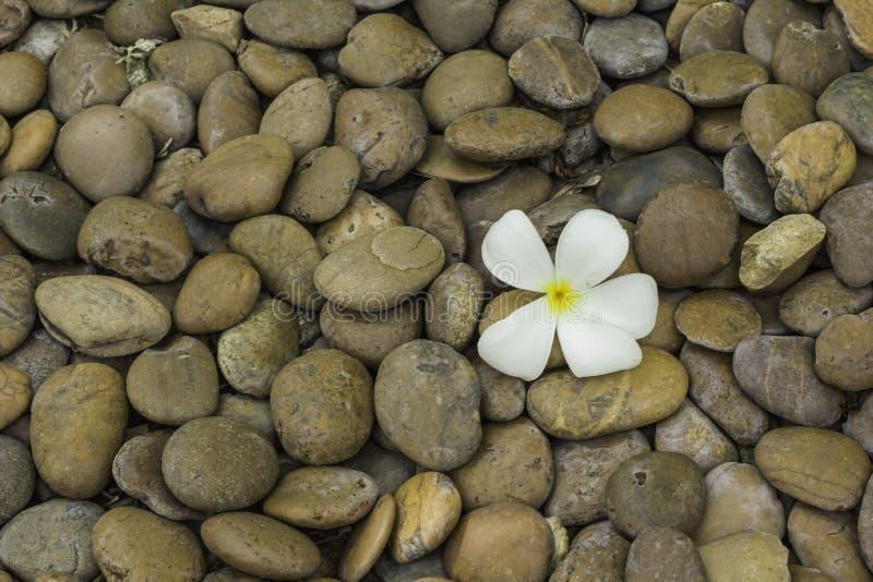 Pedras coloridas e flores brancas fotografia de stock