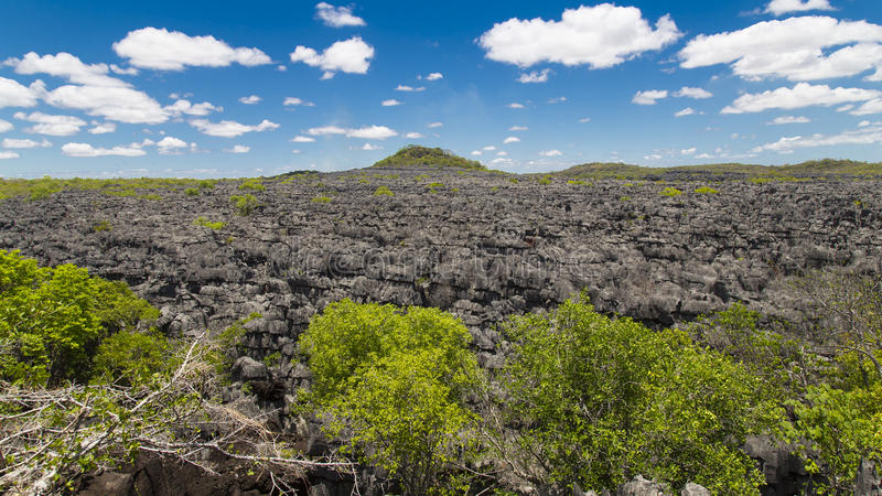 Pedras de Ankarana Tsingy, marco do norte de Madagáscar imagens de stock royalty free