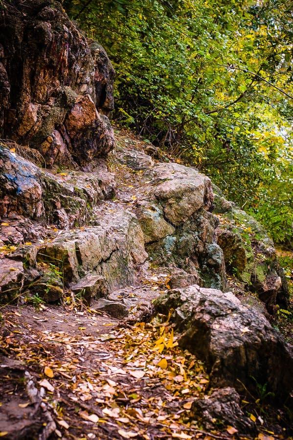 Pedras de grandes tamanhos na floresta fotos de stock