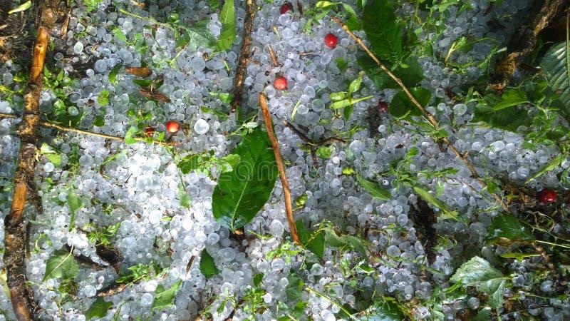 Pedras de granizo na grama Fundo da natureza fotografia de stock