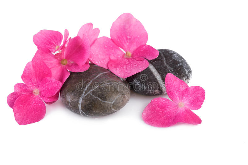 Pedras dos termas com flores cor-de-rosa Conceito do bem-estar dos termas imagem de stock