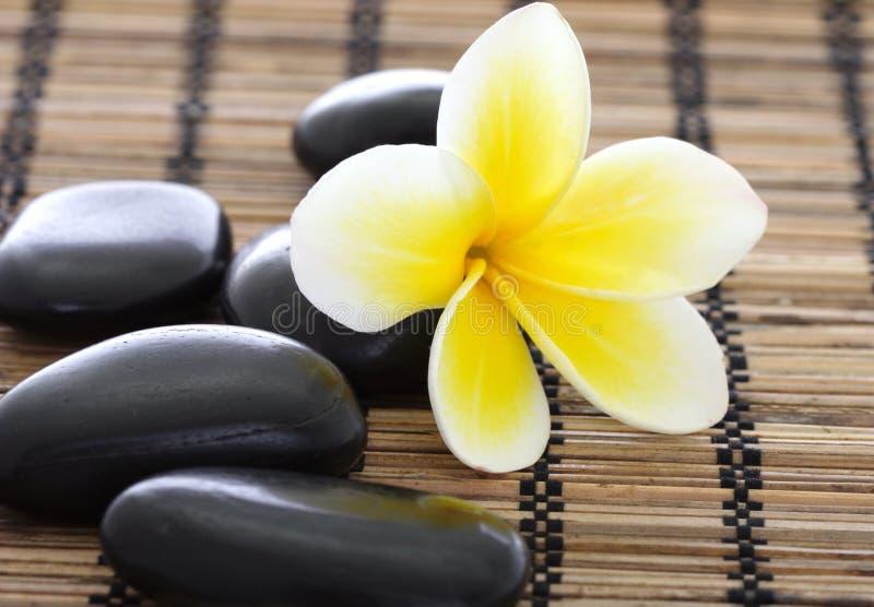 Pedras dos termas com frangipani fotografia de stock royalty free