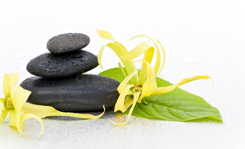 Pedras dos termas e flor do Ylang-Ylang fotos de stock