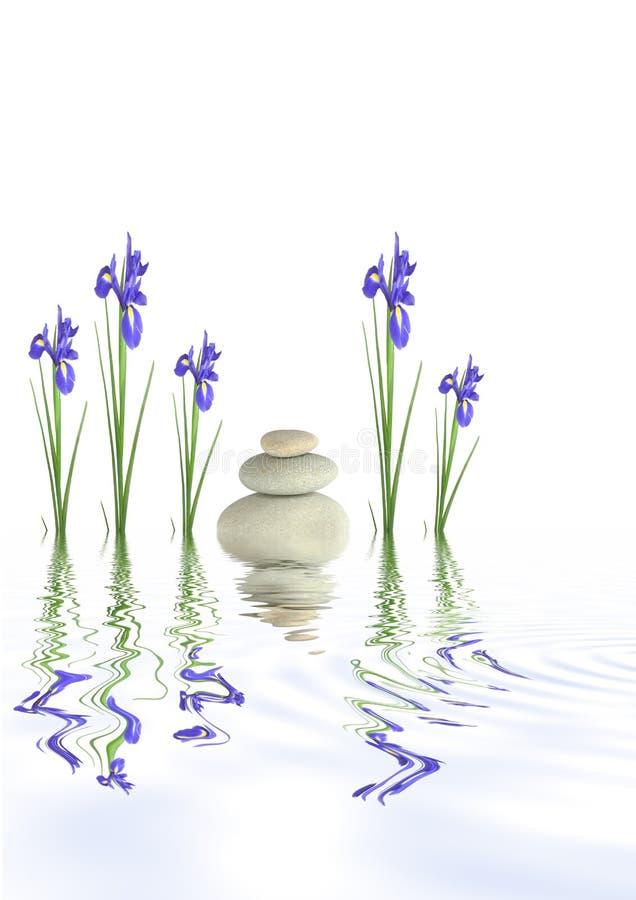 Pedras dos termas e flores da íris fotografia de stock