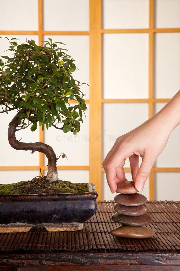 Pedras e bonsais do zen fotos de stock royalty free