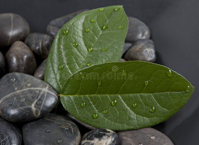 Pedras e folhas do zen com água fotografia de stock royalty free