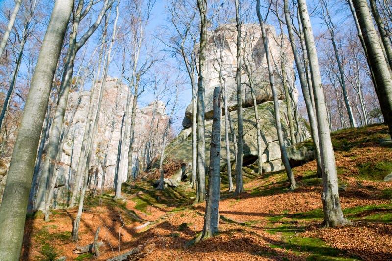 Pedras elevadas na floresta imagem de stock royalty free