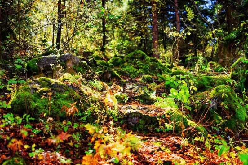 Pedras musgosos nos raios da luz solar da manhã Profundidade de campo rasa imagem de stock