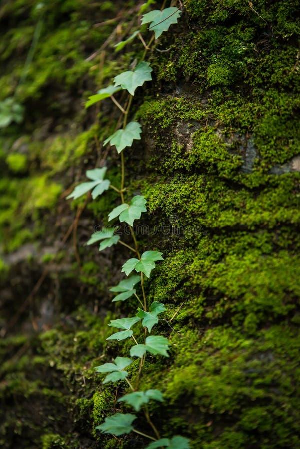 Pedras musgosos profundamente nas madeiras fotos de stock royalty free